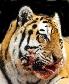 La Tigresse sanguinaire